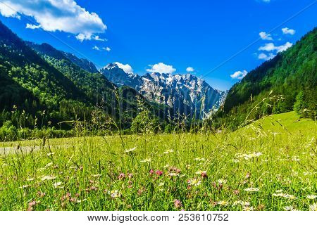 View On Green Meadow With Blloming Flowers By Logar Valley In The Slovenian Alps