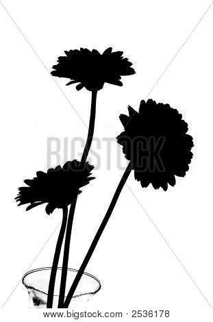Daisies In A Vase In Silhouette - B&W