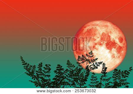 Full Moon Back Silhouette Top Branch Tree Night Sky