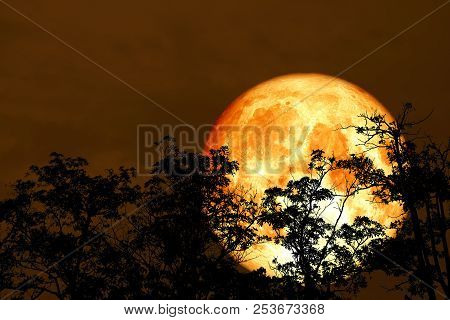 Red Blood Moon Back Silhouette Tree Night Red Sky