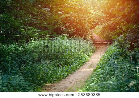 Walkway Lane Path With Green Deciduous Trees In Forest. Beautiful Alley, Road In Park. Way Through S