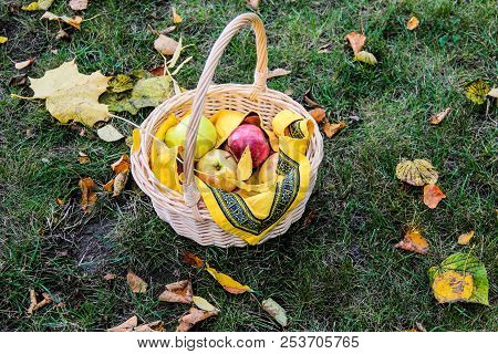 Basket With Fresh Sweet Apples On Green Grass.juicy Apples In Basket.autumn Harvest Of Apples. Just