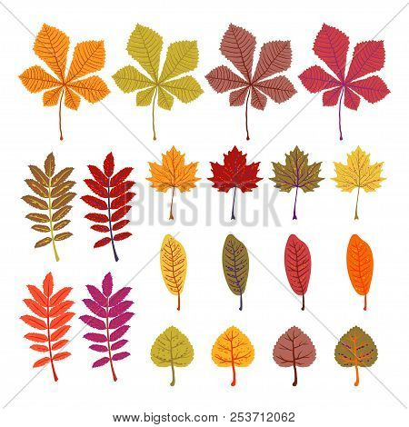 Autumn Leaves Yellow Foliage Vector Set. Season Of Orange Leaves, Illustration Collection Of October