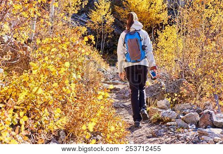 Woman tourist walking on trail in aspen grove at autumn in Rocky Mountain National Park. Colorado, USA.