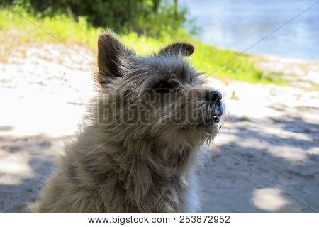 poster of Pooch dog. Ash-colored. Fuzzy. On the river bank