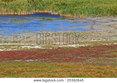 Reed Belt Landscape in National Park (Lake Neusiedl / Seewinkel) Austro-Hungarian Border poster