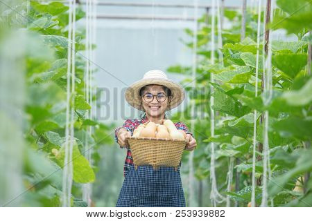 Young Woman In A Greenhouse With Butternut Squash Basket Holding And Happy.