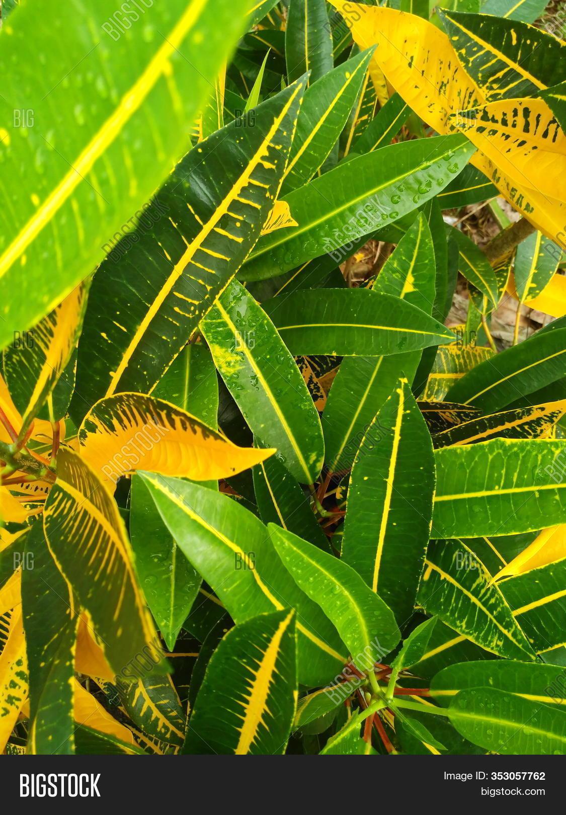 Green Leaf Leaf Image Photo Free Trial Bigstock Download transparent tropical leaves png for free on pngkey.com. green leaf leaf image photo free
