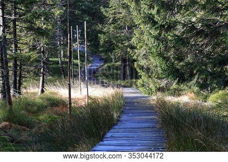 Wooden Footway In A Mountain Forest, Jeseniky, Czech Republic. E3 International Walking Path Section