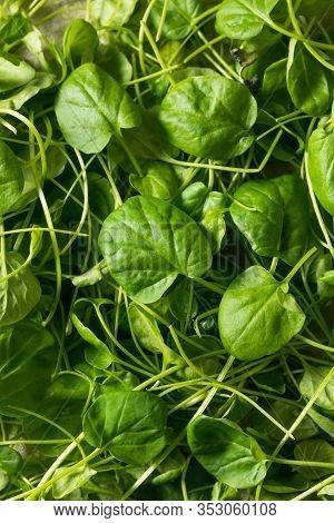 Raw Green Organic Watercress