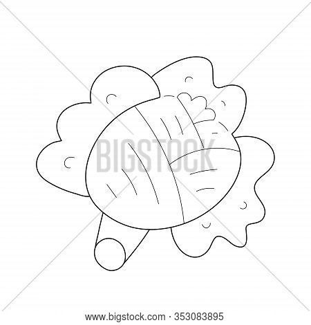 Doodle Cute Cabbage Vegetable, Outline Veggie Illustration, Isolated Cabbage Head In Trendy Line Art