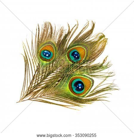 Peacock feathers. Carnival. Feather of an exotic bird.