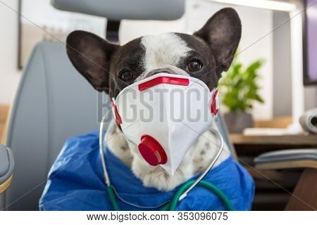 French bulldog as a medicine doctor with a protective face mask for viruses at the doctor office