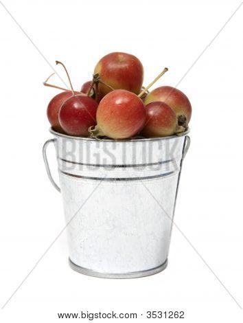 Bucket Of Crabapples