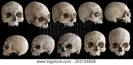 Human Anatomy. A Human Skull Without A Jaw. Collection Of Rotations Of The Skull. Skull At Different