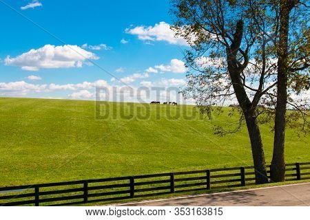 Horses At Horse Farm. Country Summer Landscape.