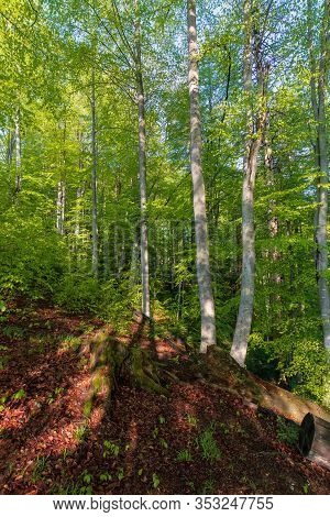 Forest Trail On The Hillside. Beautiful Nature Scenery With Beech Trees On A Sunny Day