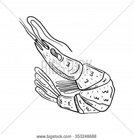 Shrimp Sea Food Hand Drawn Doodle Vector Illustration, Design Element, Icon, Sticker. Isolated On Wh