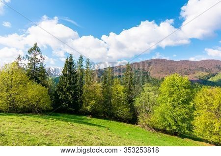 Beautiful Landscape In Springtime. Row Of Trees On The Meadow. Mountain Ridge Beneath A Blue Sky Wit