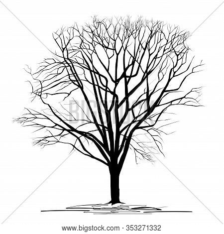 Silhouette Of A Chestnut (castanea L.) Tree With Fallen Leaves, Black Vector Image On A White Backgr