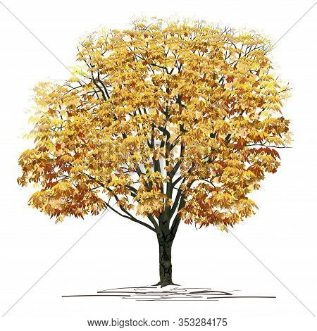 Chestnut (castanea L.) Tree With Dense Yellow Foliage, Color Vector Image On A White Background