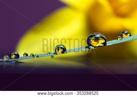 A Macro Portrait Of Some Waterdrops On A Blade Of Grass Touching The Surface Of Some Water. In The B