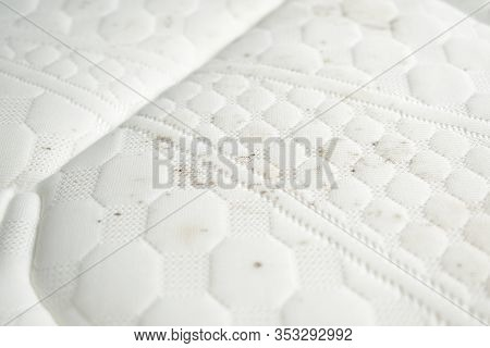 Mildew On A Mattress. Moldy Stains On A White Fabric.