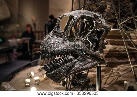 Tokyo, Japan - February 15 2020, Camarasaurus Skull Fossil At National Museum Of Nature And Science