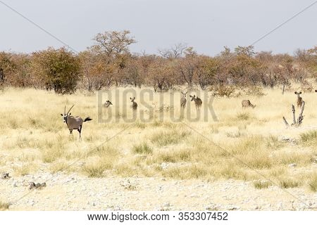 Animals Arriving At Water Hole In Namibia