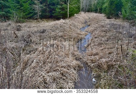 Creek Running Through The Woods Winter, South Bohemia, Czech Republic