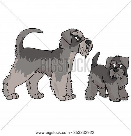 Cute Cartoon Schnauzer Vector Clipart. Pedigree Kennel Doggie Breed For Dog Lovers. Purebred Domesti