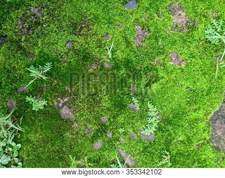 Beautiful Green Moss Nature On The Stone, The Ground Is Covered In Moss. Beautiful Moss Backgrounds.