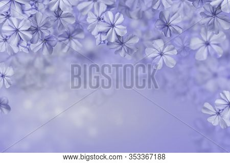 Blue Little Flowers On A Blue Flower Background, A Plumbago Flower Background With Lights, Pale  Blu