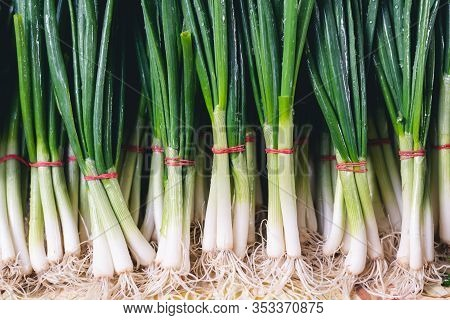 Fresh Spring Onions Food Closeup. Healthy Food. Vegetarian Food. Nutritious Food. Fresh Veggies On M