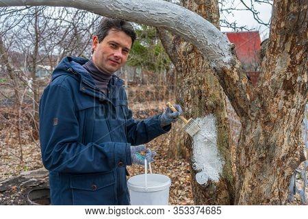 Whitewashing Of Fruit Trees In Spring Garden. Human Hands In Gloves Holding Brush And Whitewash Buck