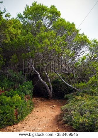 Hiking Path Surrounded With Pine Trees On Sea Coast In Atalis Nature Park Near Sant Tomas In Menorca