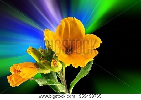 Freesia (iridaceae) In Front Of A Colorful Artistic Abstract Twisted Background.