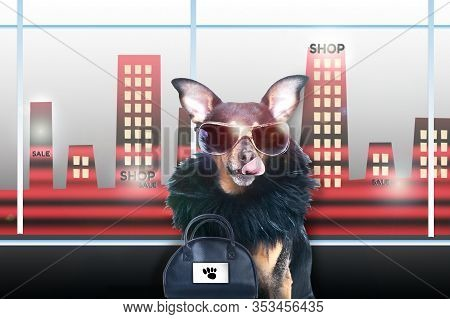 Shopping Concept. Dog, Stylish, Chic Diva In A Fur Coat And Glasses Licked In Anticipation Of Purcha