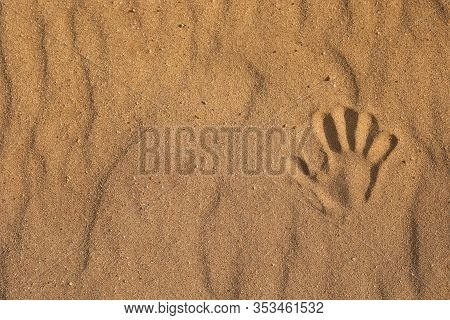 Handprint On The Sand. Close Up Of One Handprint In The Sand, Sea On The Beach. Copy Space