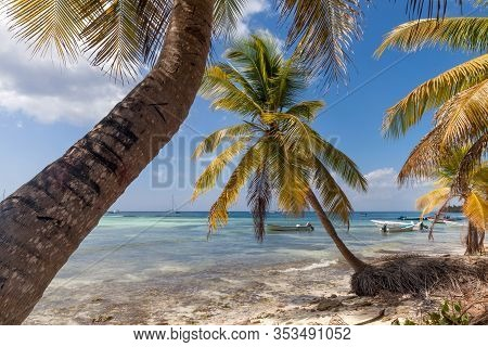 Tropical paradise with palm trees near the beach during bright sunny day in Punta Cana, Dominican Republic