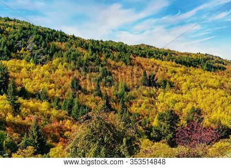Autumn Has Turned The Leaves To Brilliant Colours On The Side Of A Hill Behind A Park In Arrowtown,