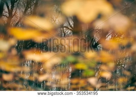 Autumn Reflection In Forest Puddle. Reflection Of Trees In A Dirty Puddle With Autumn Leaves. Backgr