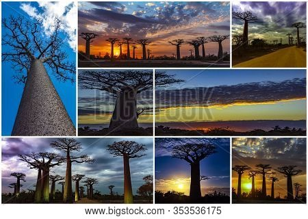 Collage - Set Of Baobab Trees, Morondava, Madagascar.