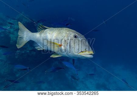 Beautiful Tropical Big Coral And Reef Fish, Red Sea Egypt