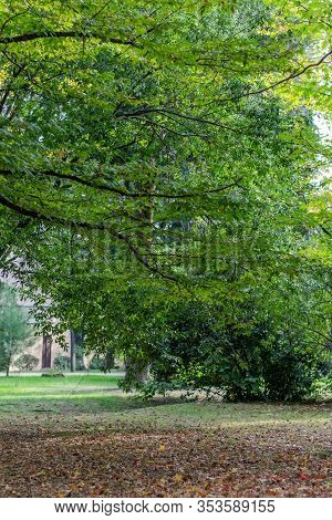 Green Lawn In The Park With Fallen Leaves. Green Trees. Blurred Background. Fallen Leaves. Secluded