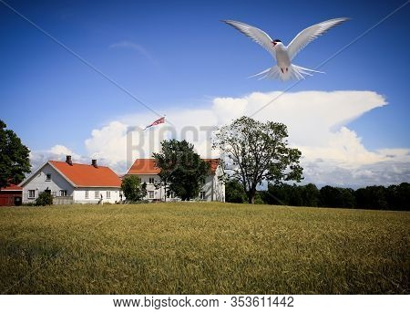 Vestfold, Norway On July 08. View Of A Farm In Sunshine, Bird And Crop This Side On July 08, 2009 In