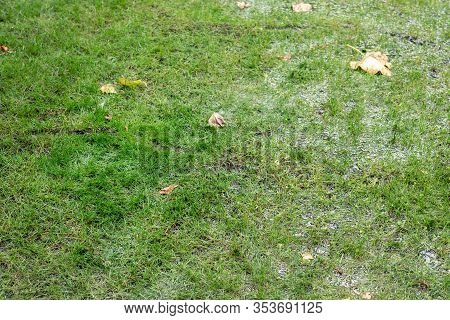 Close-up Detail Green Grass Lawn Covered With Water Due To Snow Melting Thaw And Flash High Water At