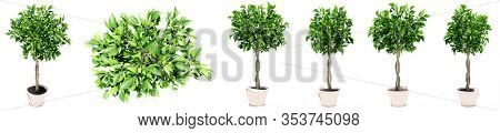 Set or collection of beautiful green interior plants isolated on white background as a metaphor for nature and ecology, beauty and gardening, spring or summer