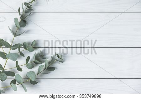 Eucalyptus Leaves On White Wooden Background. Frame Made Of Eucalyptus Branches. Flat Lay, Top View,