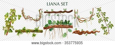 Tropical Lianas Bindweed With Virginia Creeper Monstera Plant Decorative Vines Elements Set Against
